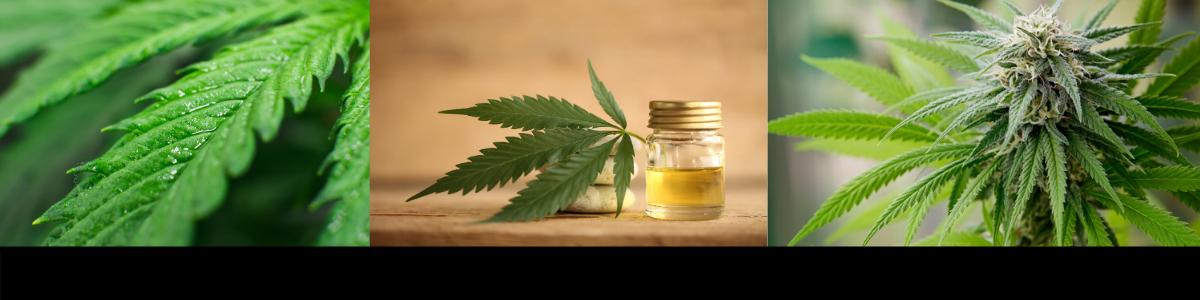 CannabisHeader