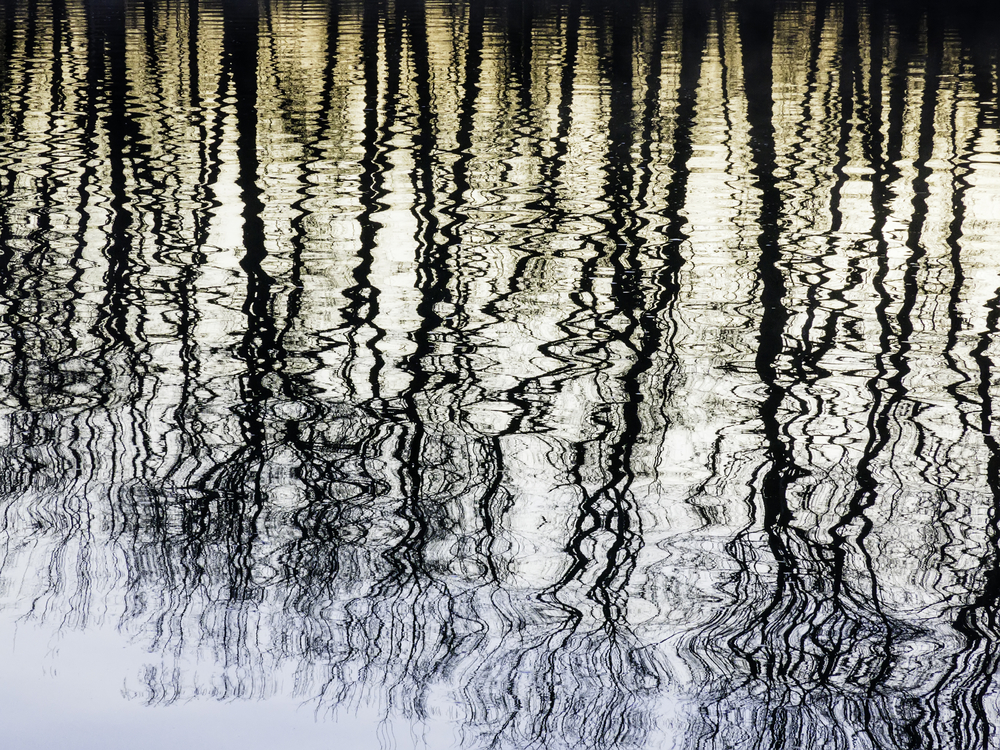 Magical moment at dawn Silhouettes of a row of bare trees reflected along the Galien River, April in southwestern Michigan
