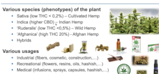 Video Thumbnail for Cannabis GCxGC Presentation from University of Liege
